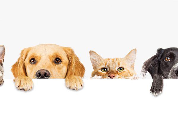 calanna-whole-health-pharmacy-animal-care