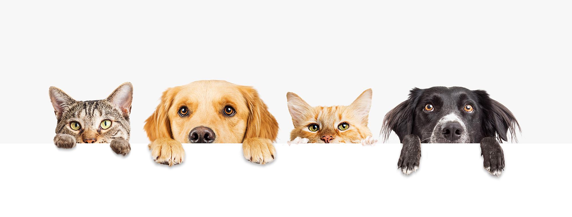 Animal Health Care at Calanna Pharmacy