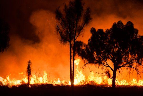 calanna-whole-health-pharmacy-bush-fire-smoke-health-tips