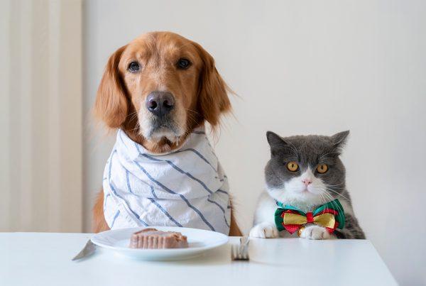 Calanna-Pharmacy-4-Benefits-of-Feeding-Your-Pets-Whole-Foods